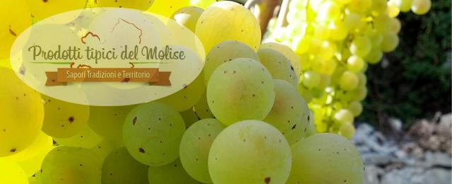 Quali sono le denominazioni vinicole del Molise?
